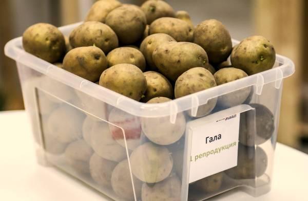 Обработка клубней картофеля: выбор средства